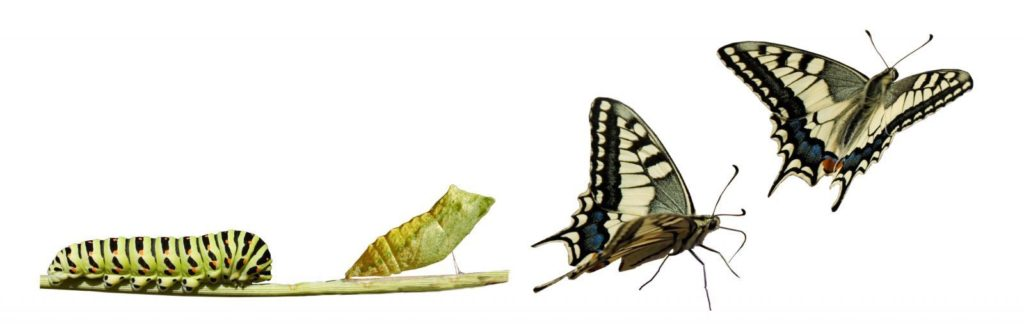 The New Humanity Butterfly Transformation